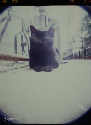 holga_blackcat_1